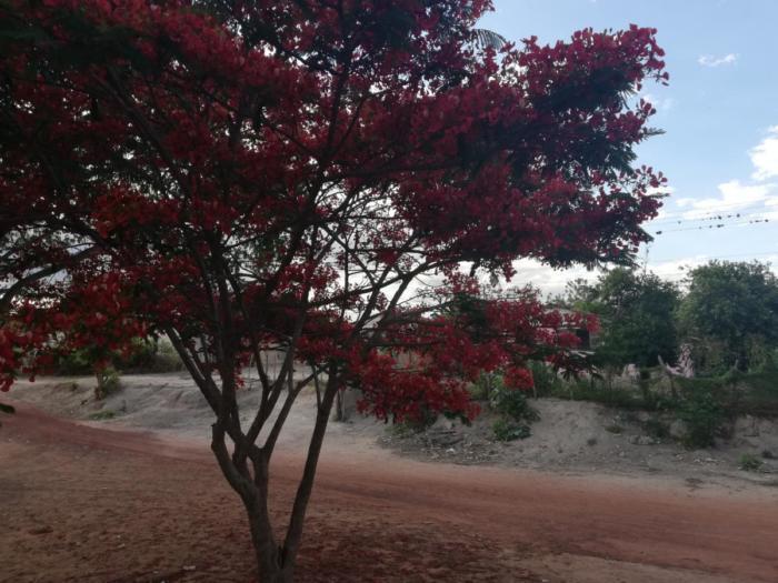 Roter Baum
