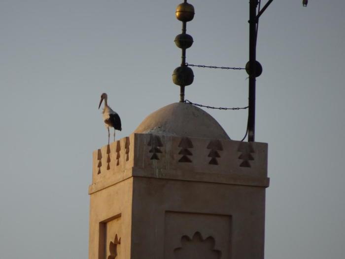 Storch auf einer Moschee