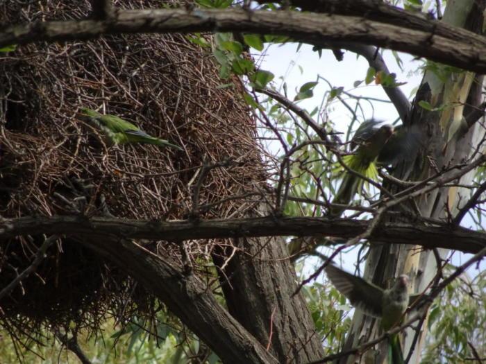 Vogel und Nest