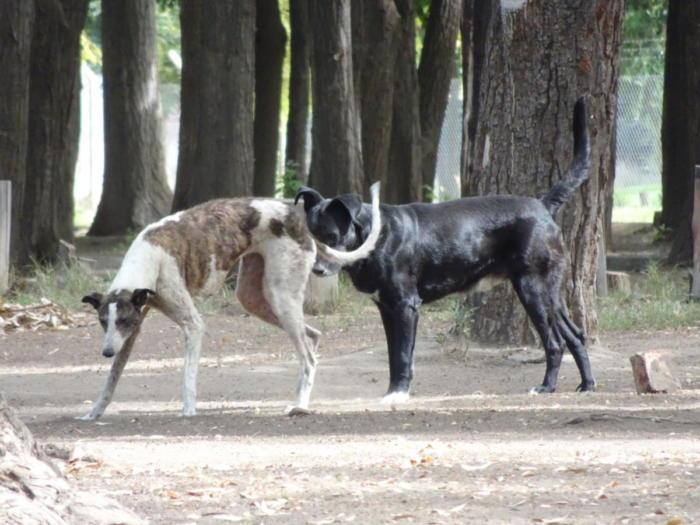 Campinghunde