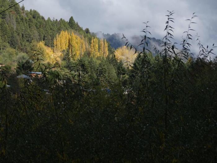 Gelbe Spitzen