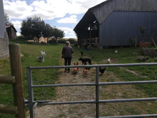 Im Hof mit Hühnern und Hunden