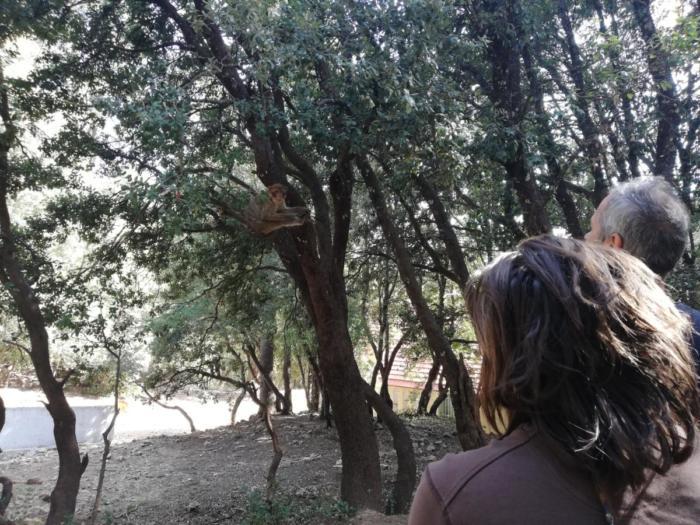 Beim Affen beobachten