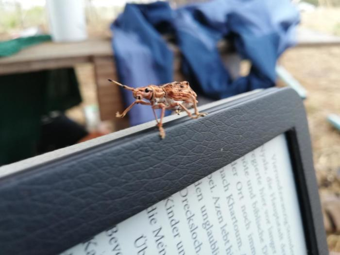 Lesen mit Käfer