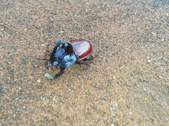 Ein arroganter Käfer