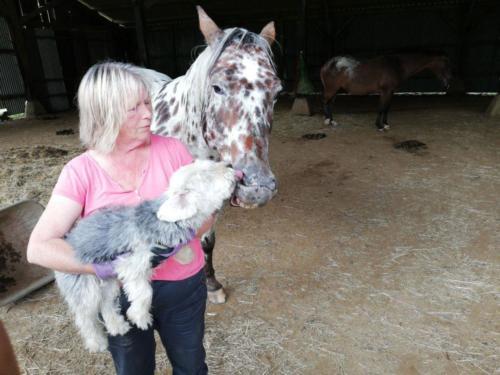 Hund Lulu leckt die Pferdeschnauze