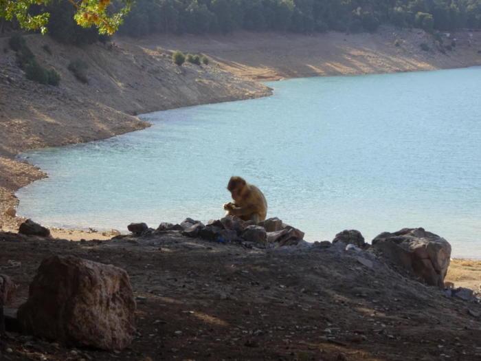 Affe vor See