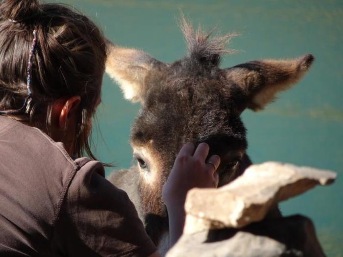 Klara mit Esel