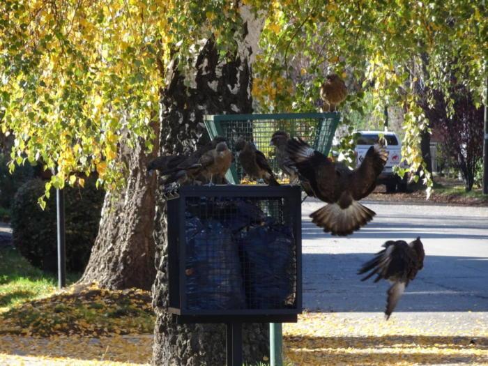 Vögel um den Müllkäfig