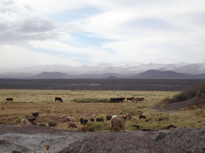 Argentinien - San Rafael